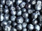 Fresh Organic Blueberries video