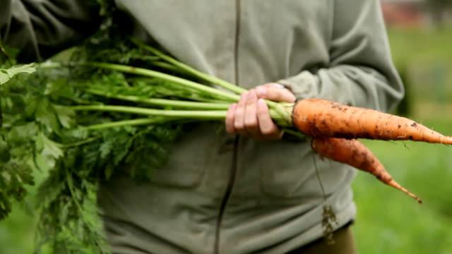 fresh organic carrots and onions video