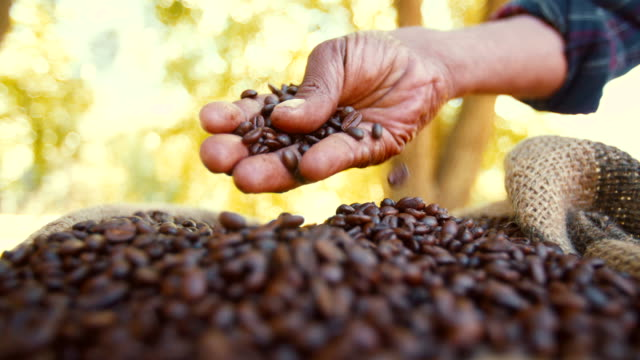 Fresh organic coffee straight from the farm's harvest video