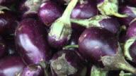 HD: Fresh Organic Indian Eggplant, Aubergine, Brinjal video