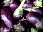 Fresh Organic Indian Eggplant, Aubergine, Brinjal video