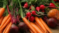 Fresh organic root vegetables video