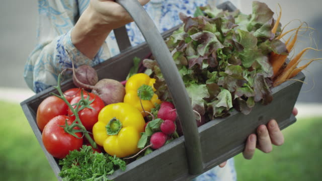 Fresh Organic Vegetables - 4k video