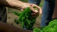 fresh parsley video