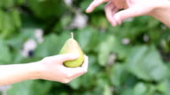 Fresh pear in woman's hand. video
