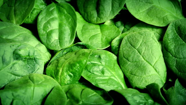 Fresh Spinach Rotating video