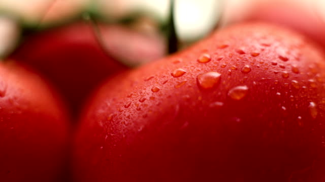Fresh tomato close-up video