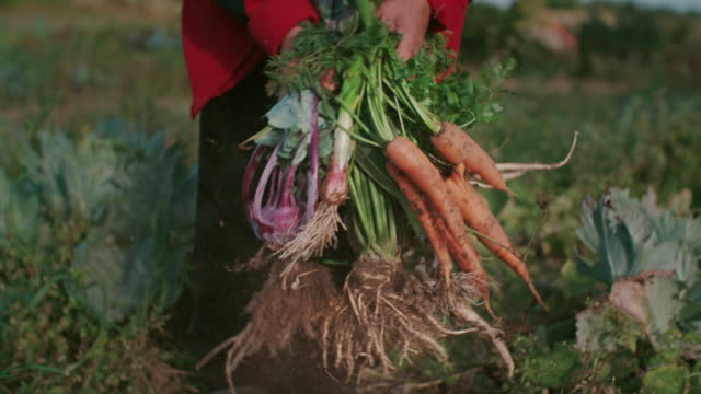 Fresh Vegetable in Woman Hands video