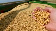 Freshly harvested soybean video