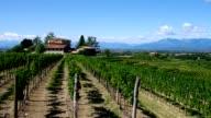 Friaul vineyard estate video