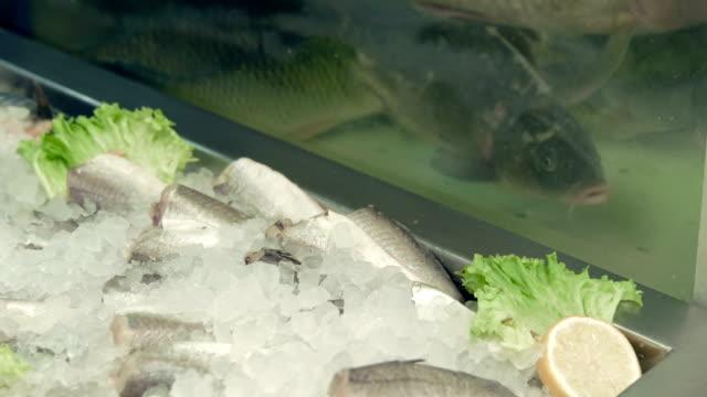 Fridge with fish and aquarium in the supermarket video