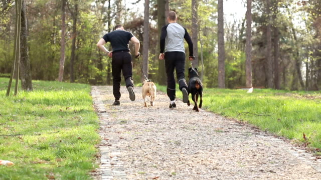 Friends jogging in park with their dogs video