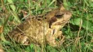 HD: Frog video