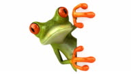Frog with a blank sign video