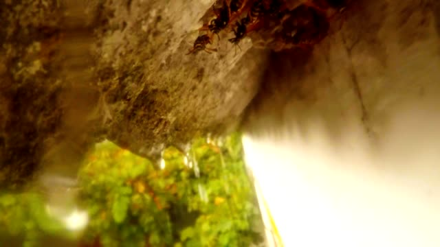 From Roof Dropping Rain under Cornice Wasp Hide in Nest Close Up video