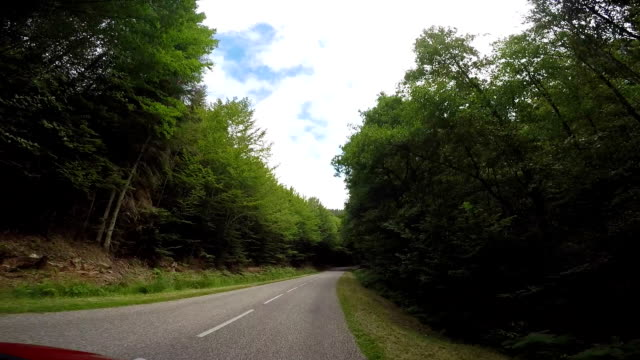 POV from vehicle ad it drives along forest road video