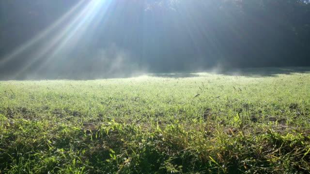 Frost grass video