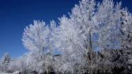 Frost-covered trees along creek video