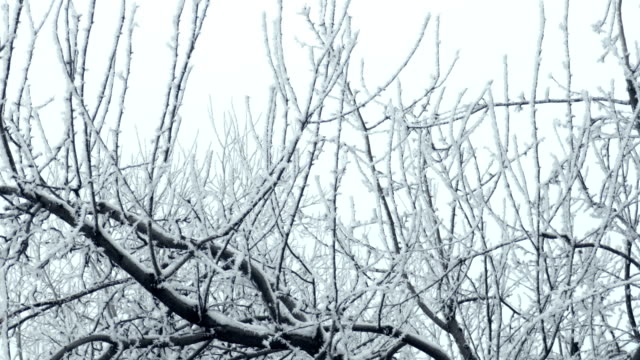 Frosted Tree Branches Fading to Sky video