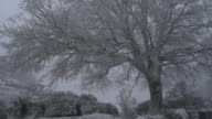 frosted tree moved by the blizzard video