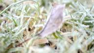 Frosty grass lawn winter detail video