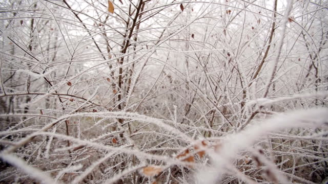 Frozen Branches In A Park video