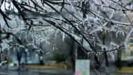 Frozen fallen bushes on the edge of road video