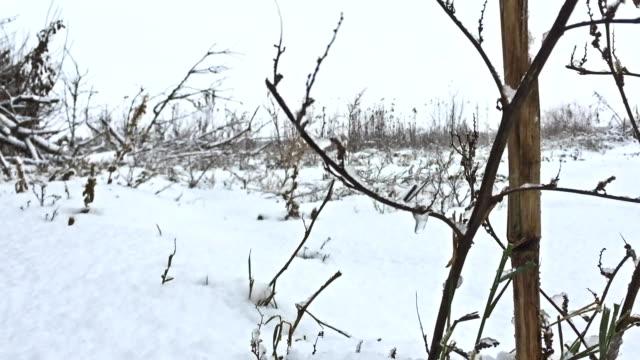 frozen grass snows beautiful winter field nature video