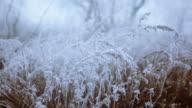 Frozen grass video