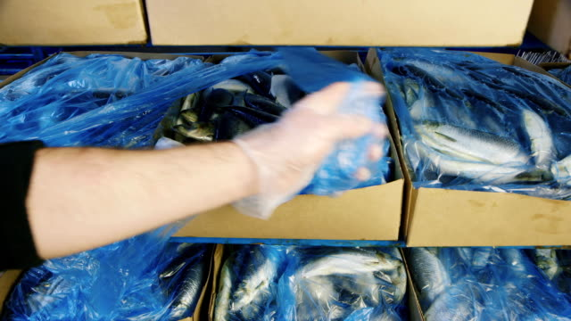 Frozen herring in the box video