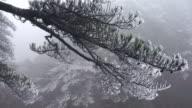 frozen pine, Mt.huangshan, Anhui, China video