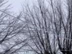 Frozen Power Lines video