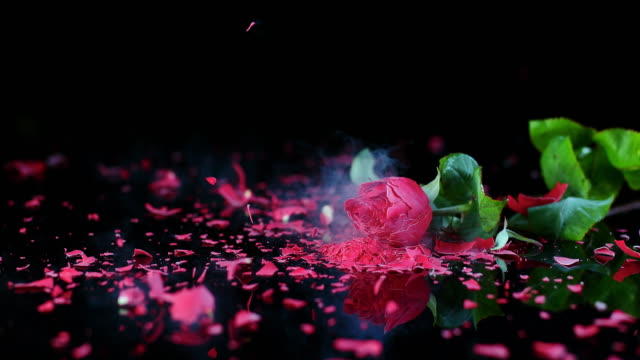 SLO MO LD Frozen red rose smashing on black surface video