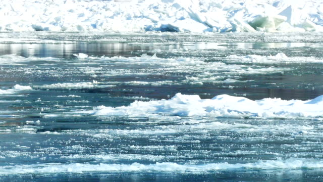 Frozen River with Icebergs in Winter video