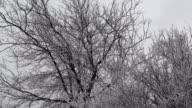Frozen Trees in the Wind video