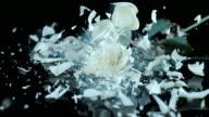 SLO MO LD Frozen white rose smashing on black surface video