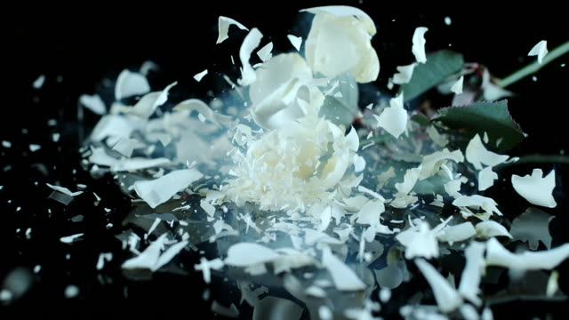 SLO MO LD Frozen white rose smashing on black surface video