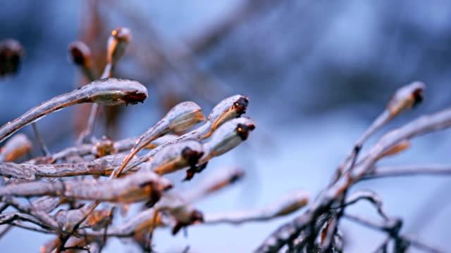 Frozen winter beauty video