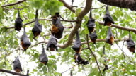 Fruit Bats video