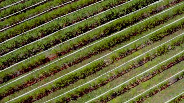 Fruit garden, Aerial shooting video