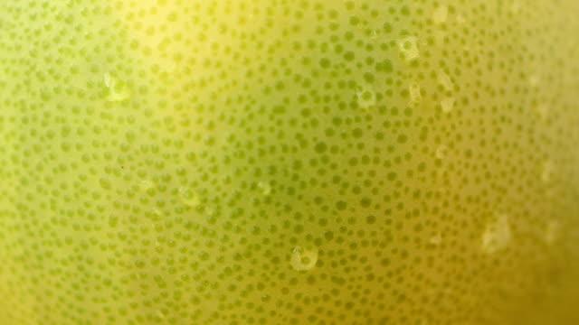 Fruit Pamela, video. video