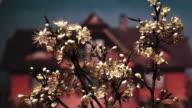 fruit tree video