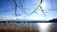 HD: Fujisan Landscape at kawaguchiko lake video
