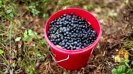 Full bucket of blueberries video