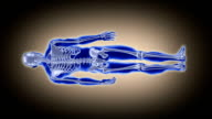 Full length human body. Scan. Loopable. Blue/white. Brown background. video