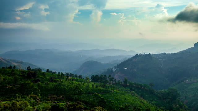 FullHD timelapse of green tea plantations on sunset in Kerala state of India video