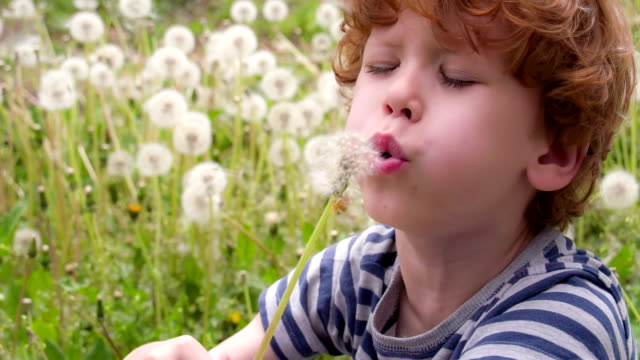 Funny Boy and Dandelions video