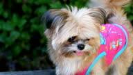 Funny cute puppy video