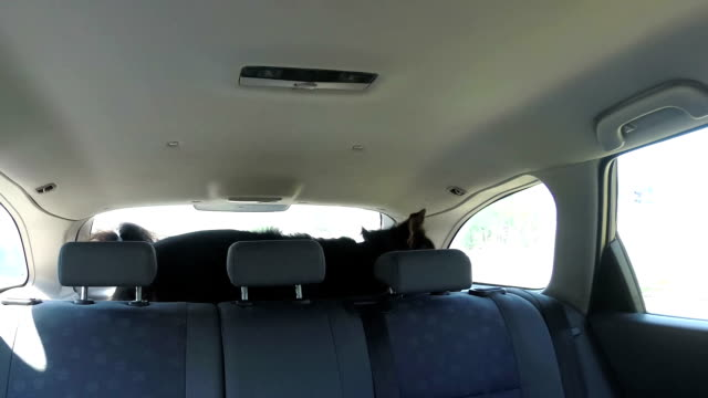 Funny dog in the car video