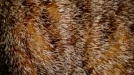Fur of cat video